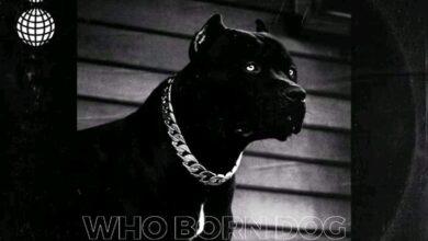 Photo of Guru – Who Born Dog (Kuami Eugene Diss)